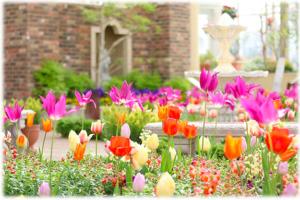 tulip-shikamachi-ishikawa