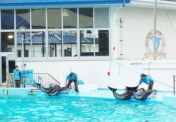 dolphin-notojima-aquarium-ishikawa