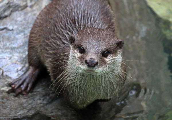 otter-notojima-aquarium-ishikawa